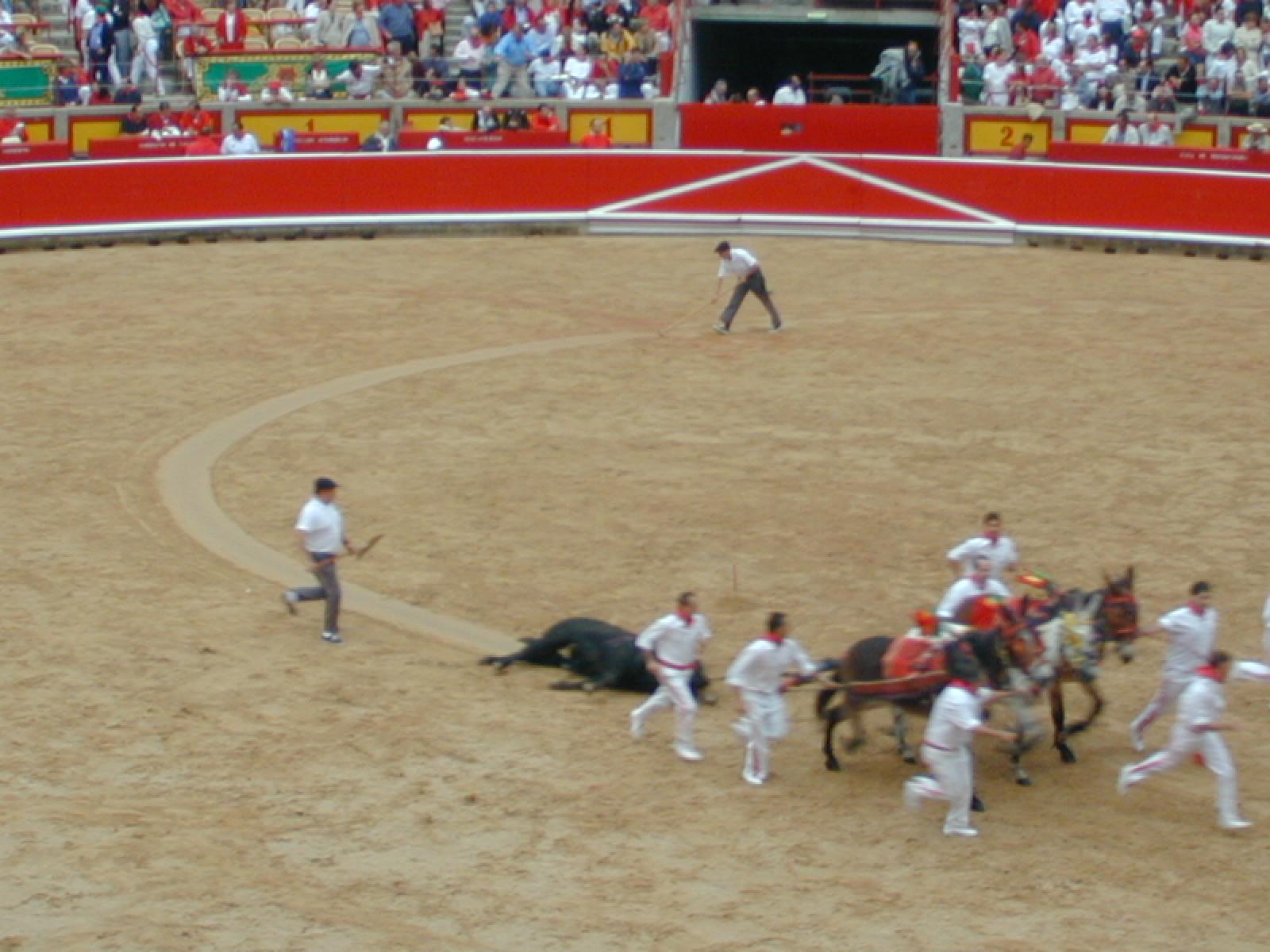 111 Dead Bull drag